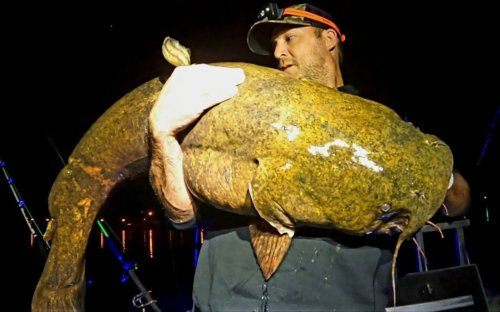 Check out this giant 'river monster' caught in West Virginia
