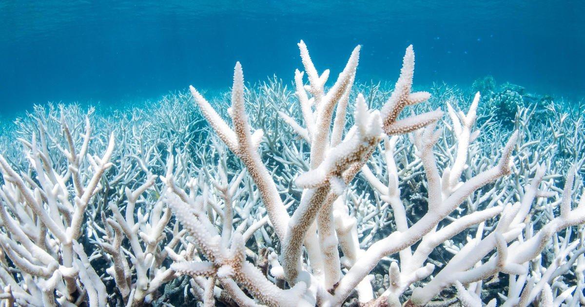 """Australia rejects U.N. warning to list Great Barrier Reef as """"in danger"""""""