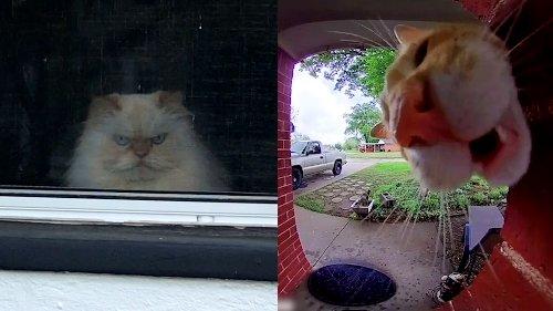 Indoor vs Outdoor Cats | Pet Pointers