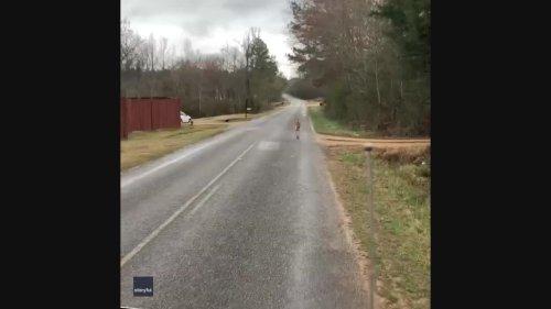 'A Game of Jumanji': Alabama Resident Chases Kangaroo on the Loose