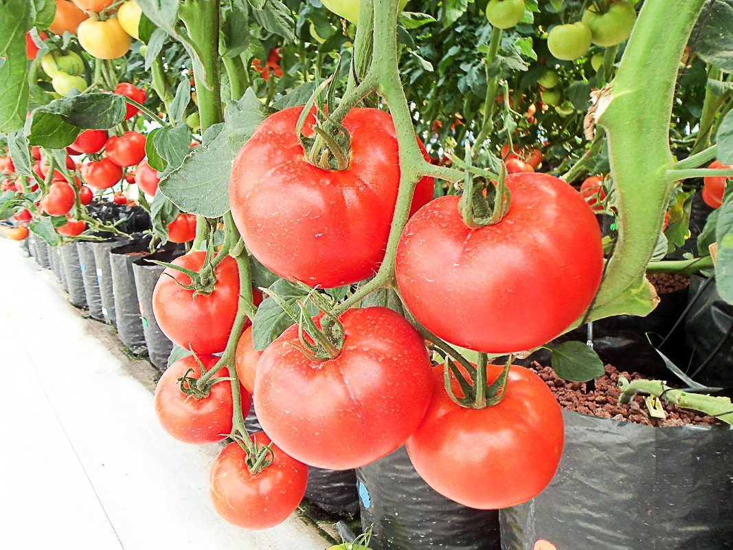 Easily Grow Vegetables At Home