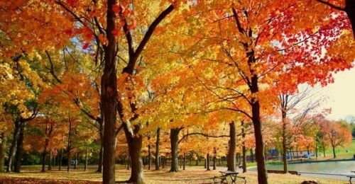 A Look At What Fall Weather In Montreal Is Expected To Be Like This Year