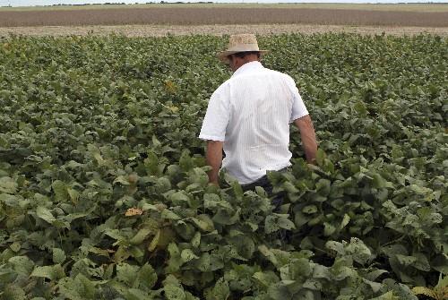 Plantio de soja mais que dobra na semana a 54% da área em MT, diz Imea