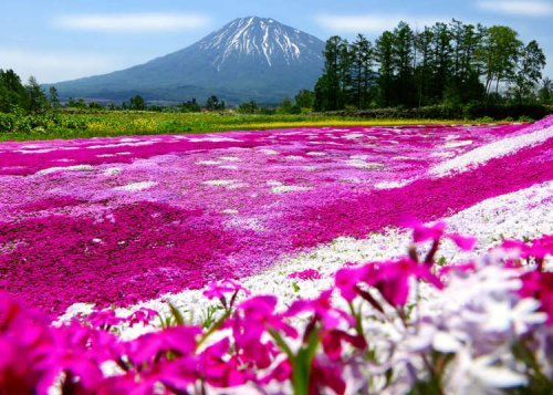 Niseko -- More Than Just Skiing in Northern Japan!