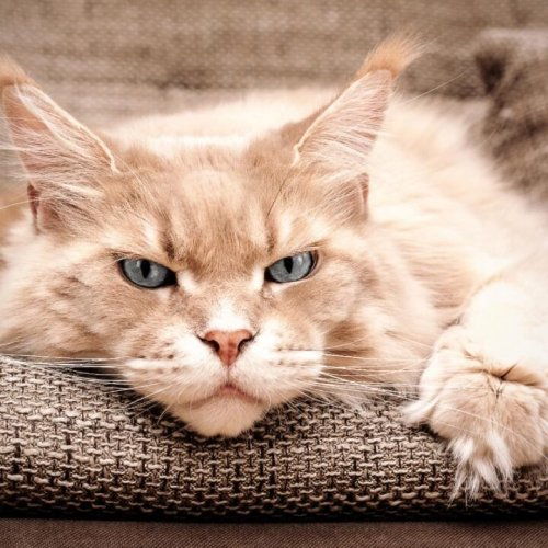 9 Things all Cat Owners Should Know about Depression in Cats
