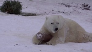 Watch Animals at Tallinn Zoo Enjoy the Purr-fect Snow Day