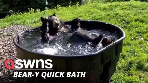 Watch this adorable moment a black bear gives himself a relaxing bath (RAW)