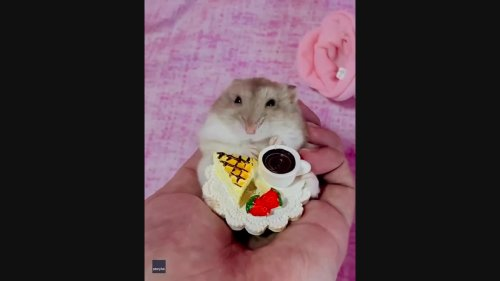 Sophisticated Hamster Enjoys Afternoon Tea