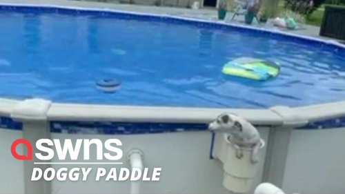 Clever pooch comes up with ingenious way of getting in and out of swimming pool THROUGH ITS TINY FILTER