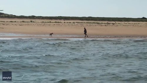 Fishermen Rescue Woman Spotted Fending Off Aggressive Coyote on Massachusetts Beach