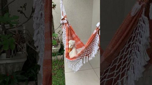 Lazy Duck Rests on Hammock