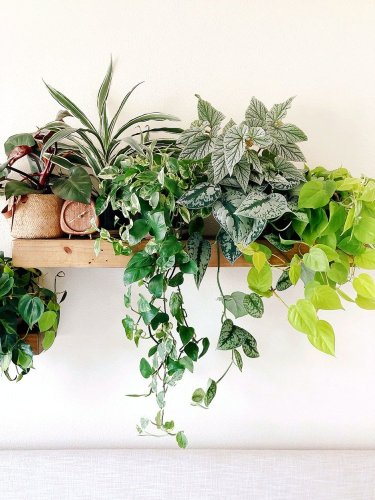 This watering hack has kept all my plants alive