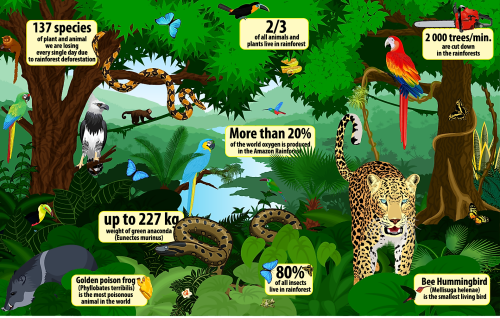 Rainforest Facts Everyone Should Know
