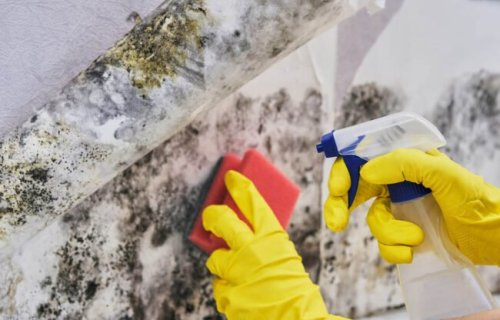 How to Get Rid of Every Kind of Mold Around the House—For Good