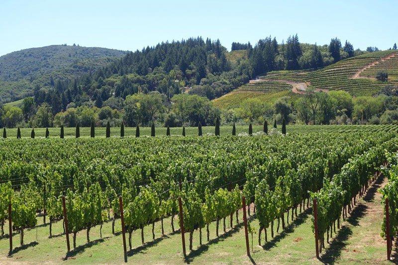 Top Wine Regions in the US