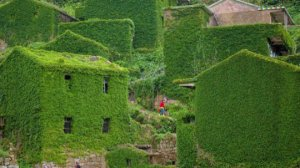 This Abandoned Chinese Village Has Turned Green