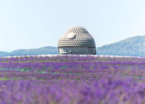 Hokkaido's Sensational Summers