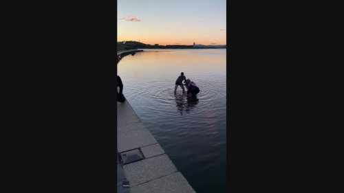 Men Rescue Kangaroo Stranded in Canberra Lake