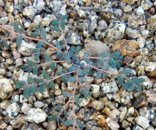 The Worst Garden Weeds and How to Get Rid of Them