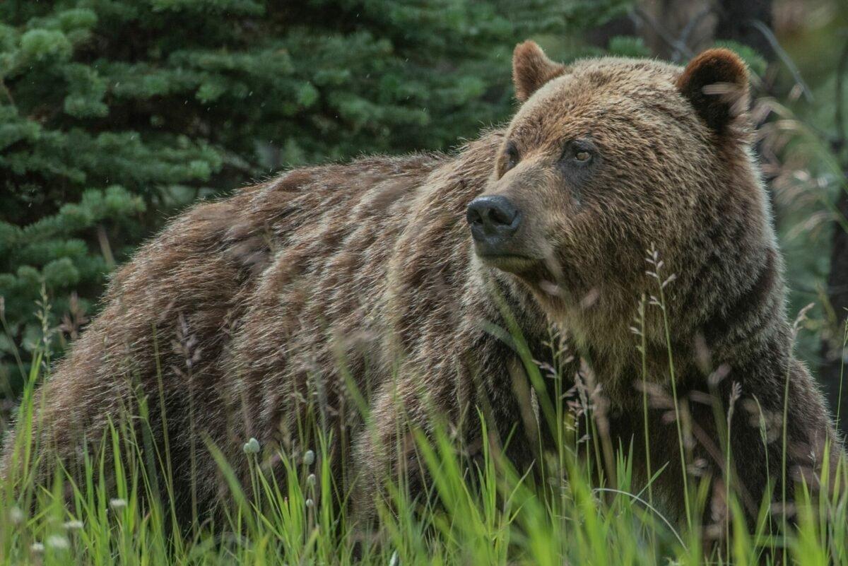 Bear market coming for Bitcoin, Ethereum, Dogecoin?