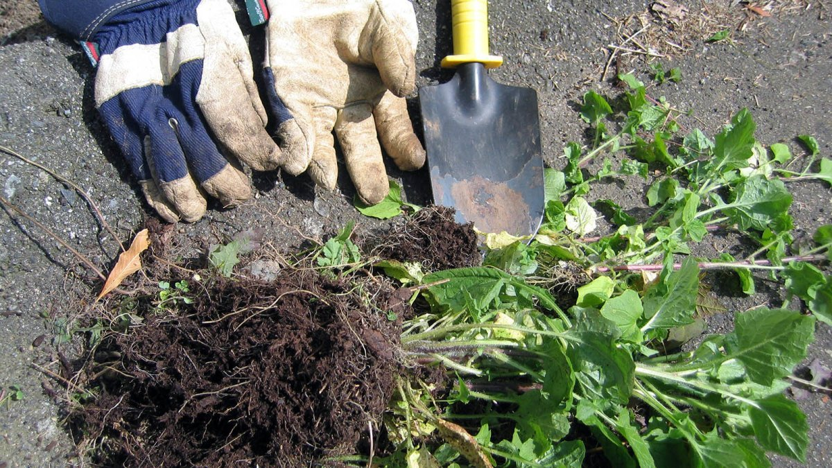Natural Weed Killers Make Gardening Safe and Easy — Plus Other Backyard Tips