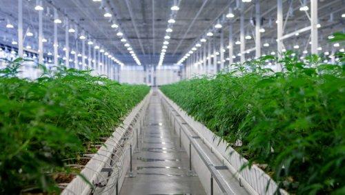 Aurora Cannabis CEO Miguel Martin Talks Rough Q3 Results