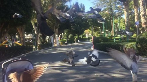 Guy ruins toddlers moments after scaring pigeons