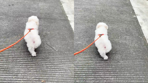 'Joyful Dog Skips Down the Path during his Afternoon Walk'