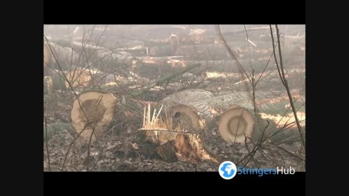 Deforestation caused by foreign logging companies in Vojvodina, Serbia