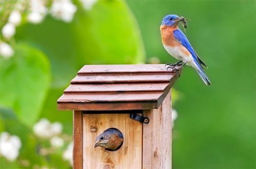 Attract Birds to Birdhouses