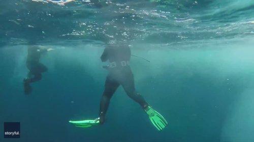 Breaching Basking Shark Adds to Dive Group's Encounter Off Irish Coast