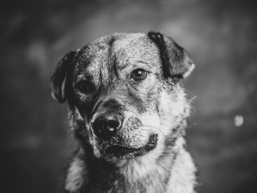 For the love of dogs: 14 photographers pay homage to man's best friend