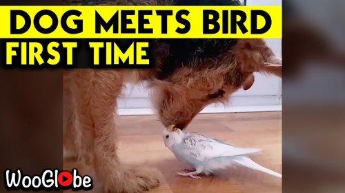 'Adorable Dog & Budgie Raising the Bar for Friendship Goals *Heartwarming* '