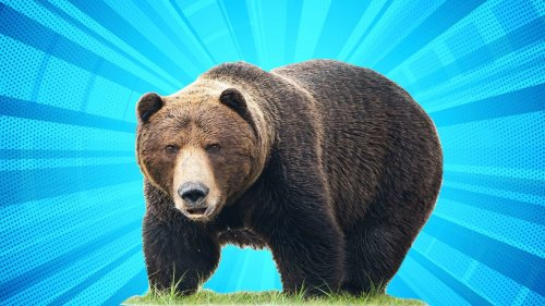 Why Are We Celebrating Fat Bears?