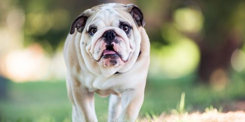 Not Small, Not Large: 12 Medium-Sized Dog Breeds That Are Just Right