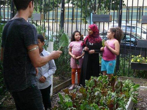 New York Urban Farming
