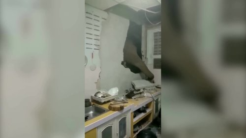 Hungry elephant breaks through wall looking for food