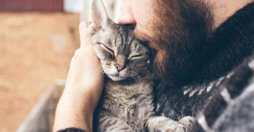11 Best Ways to Show Your Cat Love