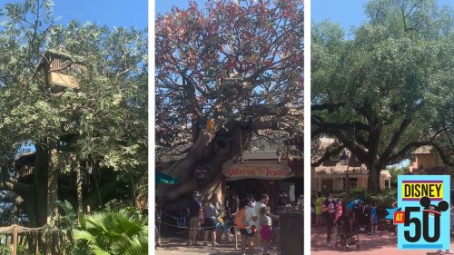 Trees at Disney World and their Magic Kingdom roots