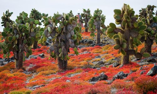 10 Great Reasons to Visit the Galapagos Islands