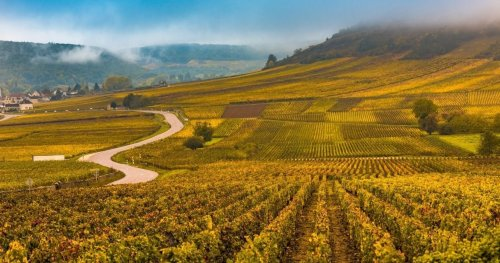 These Wineries Are Hailed As The Best In The French Alps