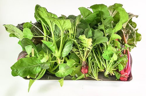 Hydroponics 101 What You Need to Know