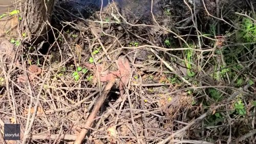 Runners Spot Plethora of Snakes Intertwined With Tree Branches Off Trail in Georgia
