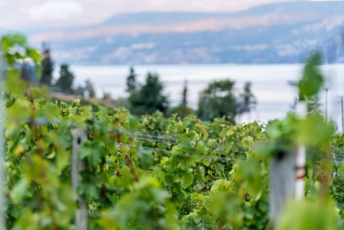 BC Wineries that Prove Canadian Wines Can Be World Class