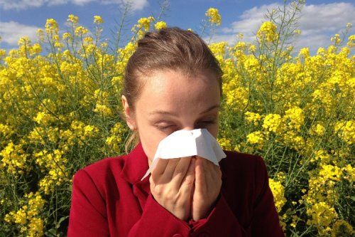 The Ultimate Beginners Guide To Healing Your Allergies Naturally