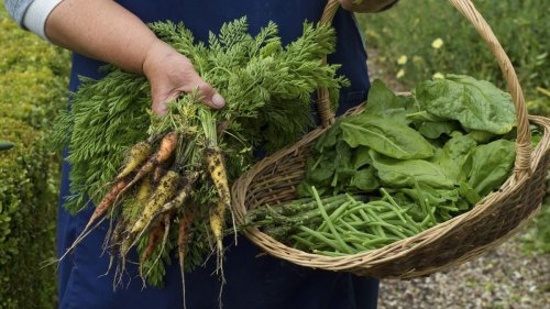 Learn how to grow your own produce with our ultimate guides