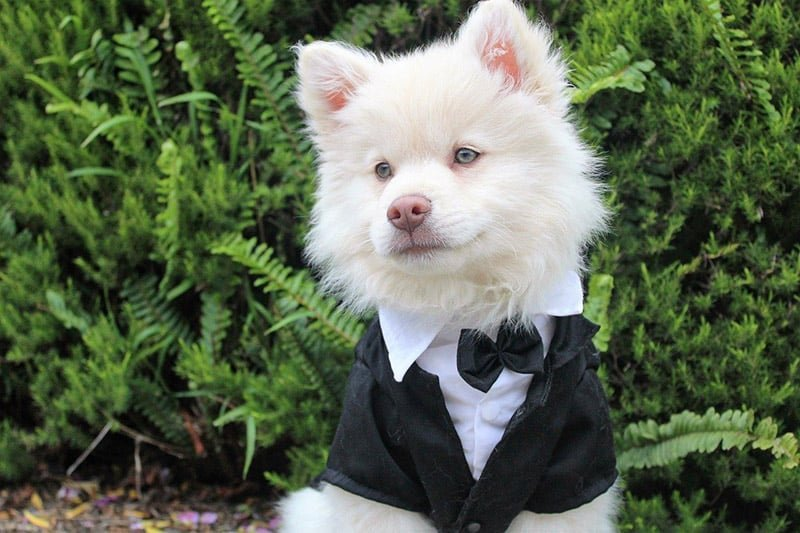 THE MOST EXPENSIVE DOGS IN THE WORLD