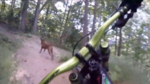 This Is One of the Coolest Videos You'll See! A Mountain Biking Dog!