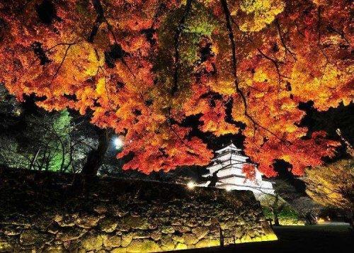 Finding Fantastic Fukushima in Fall