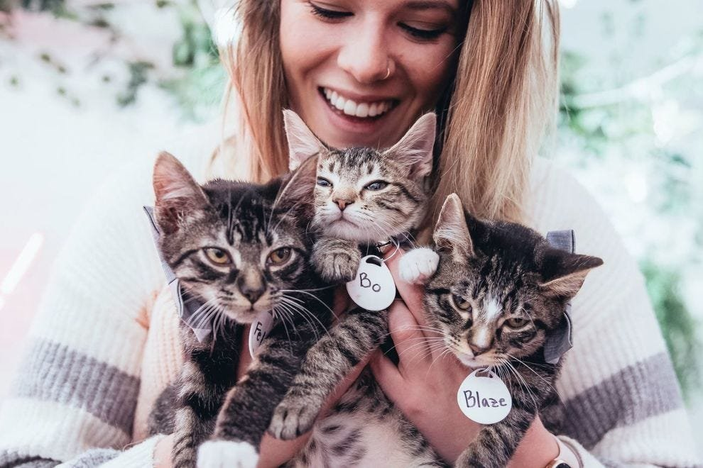 11 Things Only Cat Lovers Care About
